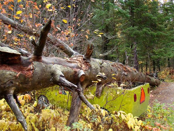 Tree fallen on truck