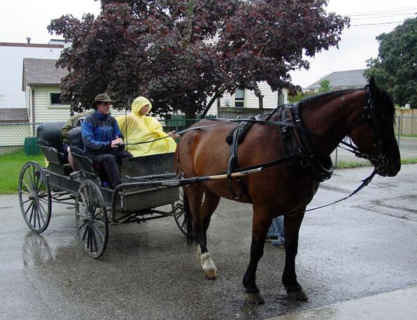 Boaz rides a Mennonite buggy